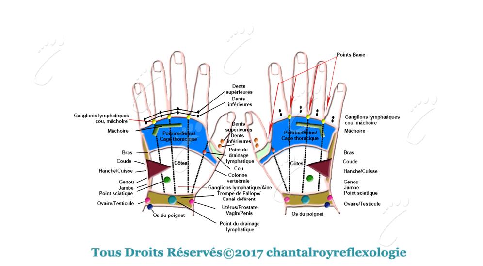 Terminaisons nerveuses-Charte des mains dorsale Chantal Roy Réflexologie
