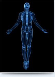 Les reins - Les Chroniques d'une réflexologue